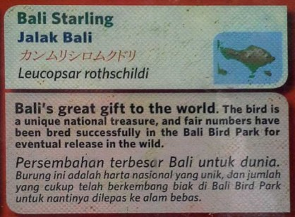 Bali Starling description