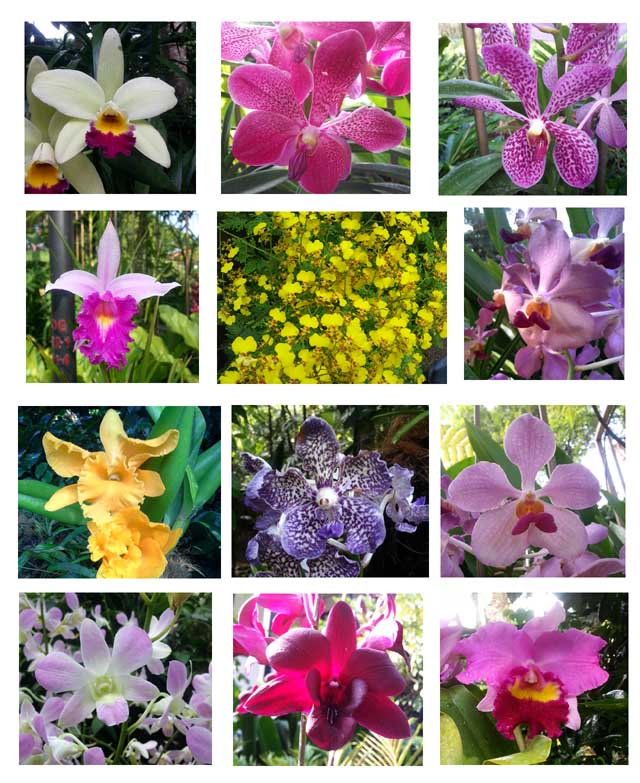 A selection of the multitude of blooming orchids