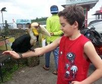 Owen supports a hornbill