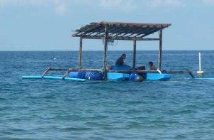 z taman sari reef restoration